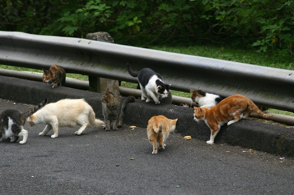 Feral Cats In Hawaii: Should They Stay Or Should They Go?