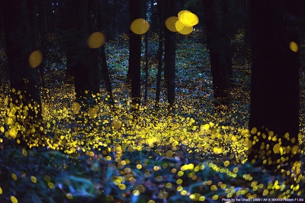 Where Did the Fireflies Go?