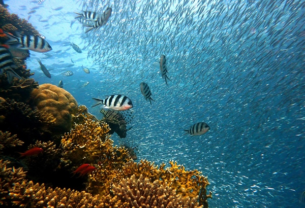 Last Chance to Save Coral Reefs