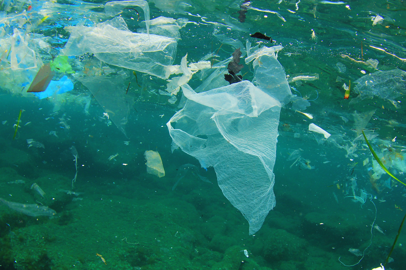 problems caused by oceanic rubbish and Water pollution may be caused by any hazardous substance or material that makes contact with the earths water supply animal habitats and oceanic ecosystems.